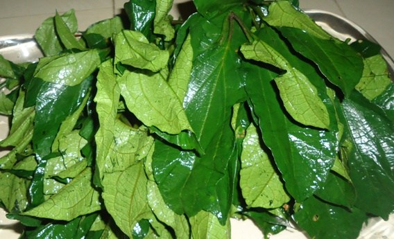 Ugu Leaves - GoMarket